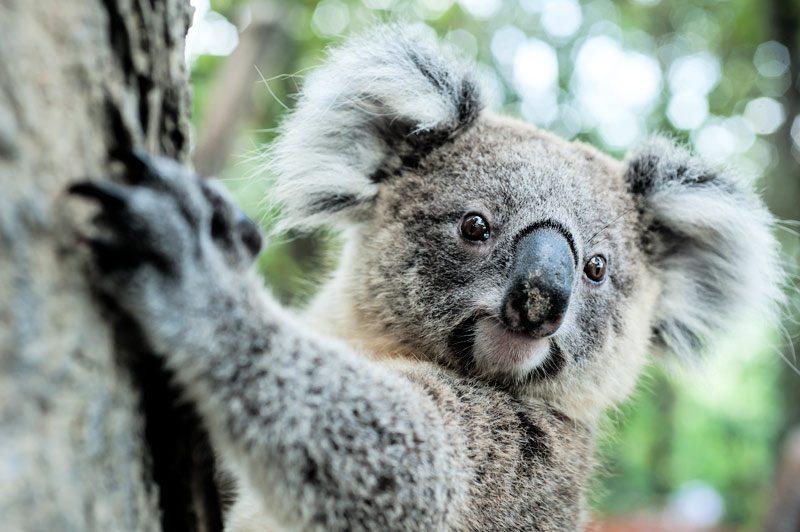Billabong Sanctuary - Australian Native Wildlife Park Townsville