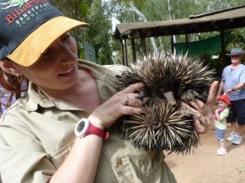Get a closer look at an echidna!